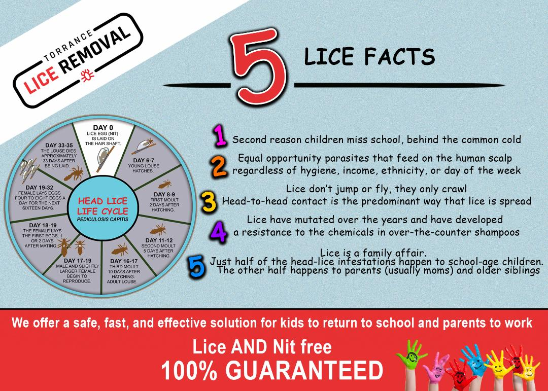 5_Lice_Facts_-_Torrance