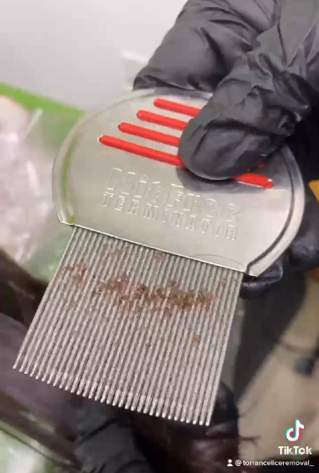 comb w lice